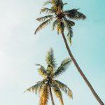 Ferienkurs Theorieprüfung statt Palmen
